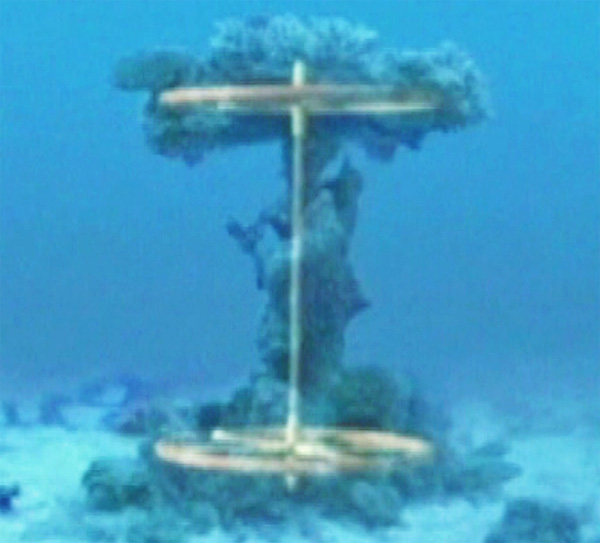 Chariot Wheels At The Bottom Of The Red Sea