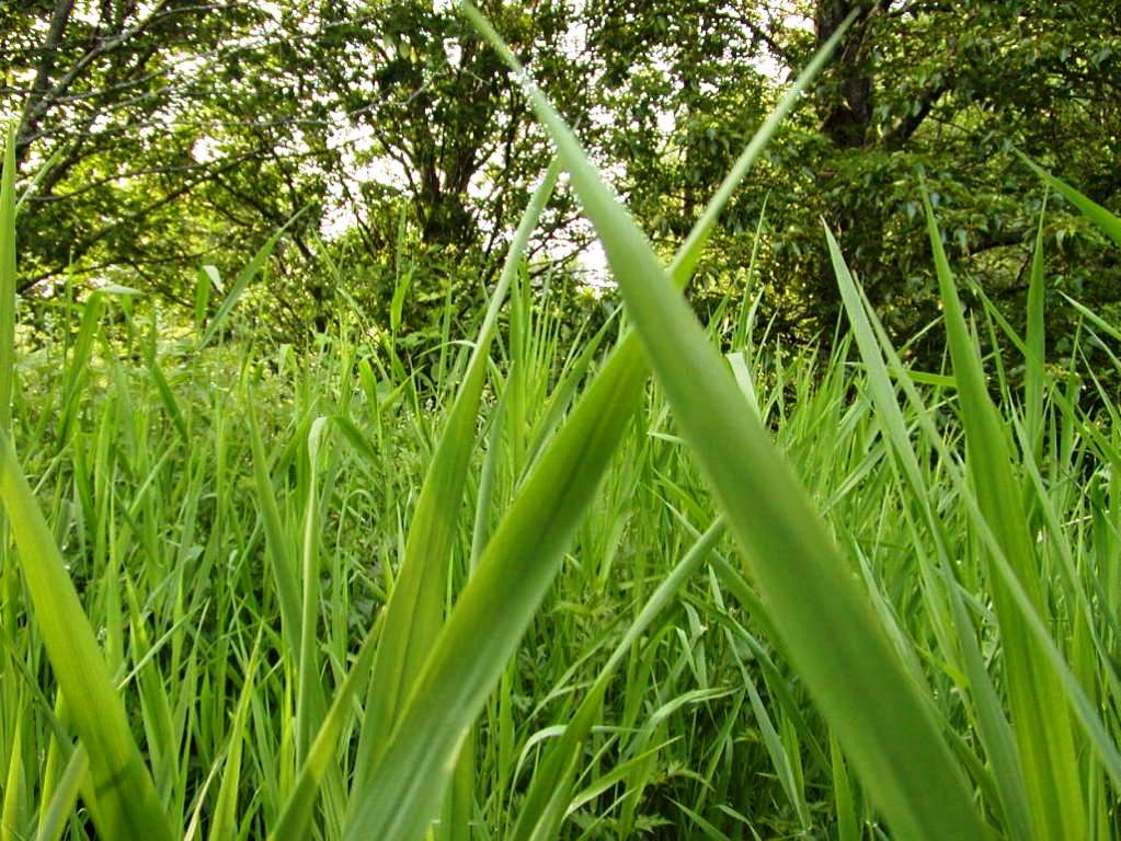 10 000 fine for messy yard tall grass for Tall ornamental grasses