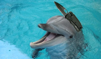 http://www.wnd.com/files/2013/03/killer-dolphin-340x200.jpg