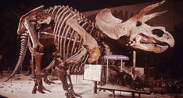 weopons-dating-dinosaur-soft-tissue-blowjob