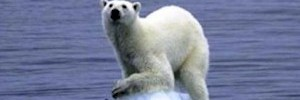 polar_bear_on_ice