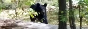 bear-attack-new-jersey