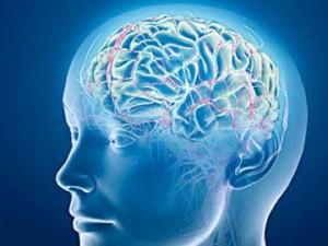 Brain_generic_360_1