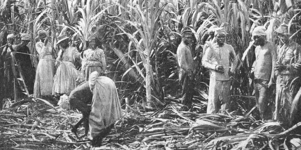 Slaves on sugar cane plantation