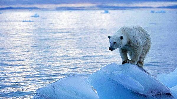global-warming-polar-bear-600