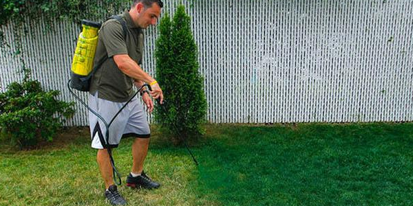 desperate californians spray painting grass. Black Bedroom Furniture Sets. Home Design Ideas