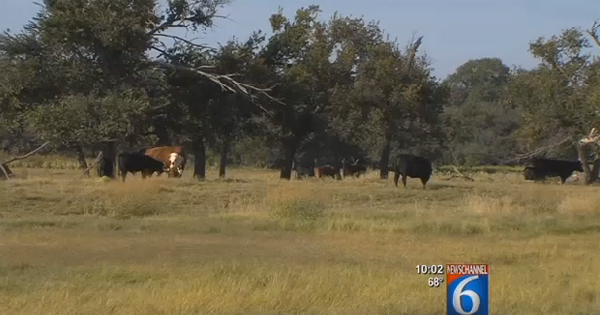 The Bureau of Land Management may push Harrold, Texas, rancher Ken Aderholt from his home after a land survey is complete (Image: KAUZ-6 Texas screenshot)