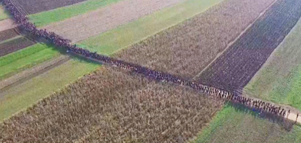 A long line of individuals walk across a field in Slovenia into Europe. (Credit: Screen shot from drone photograph, via the Telegraph video)
