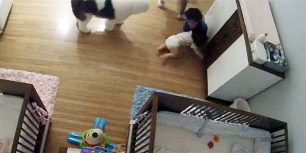 Video captures moment Joseph Levi, 9, saves his baby brother, Eitan, from hitting the floor (Photo: screenshot)