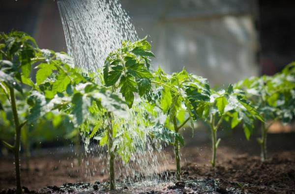 Watering-2