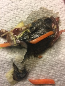 Mouse remnants found in salad