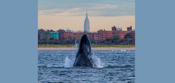 whale_nyc