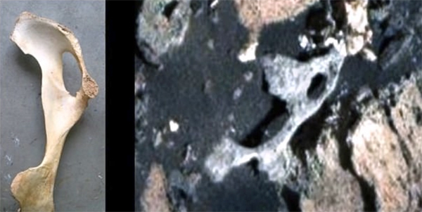 Alien enthusiasts say a weathered rock found on Mars (right) resembles a hip bone (left) (Photo: YouTube screenshot)