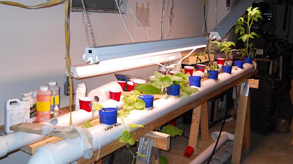 Hydroponic tomato garden (Court exhibit photo)