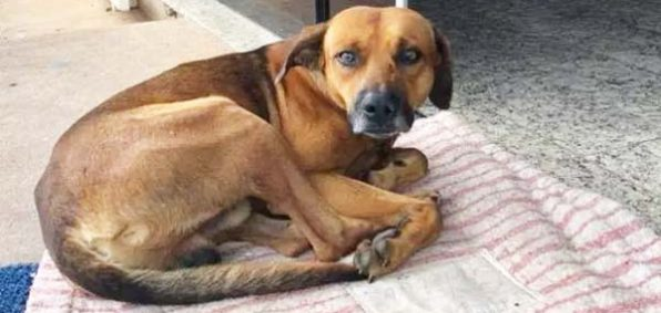 A dog in Brazil waits outside the hospital where his owner died five months ago (Photo: Facebook)