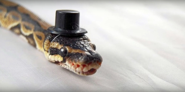 Snake with hat (YouTube screenshot, copyright-free)
