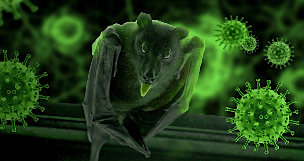 [bats-coronavirus-pixabay]