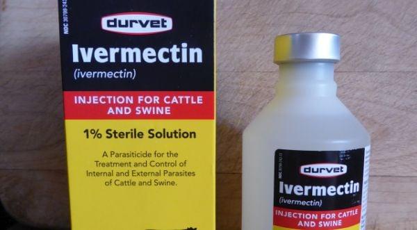 ivermectin-photo-by-Patrice-Lewis.jpg