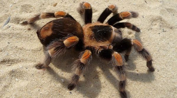 Video: Dad panics when he sees baby playing with tarantula